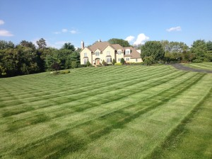 Meehan's Turf Care Customer Lawn
