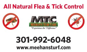 Flea and Tick Yard Sign