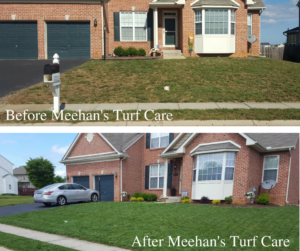 Lawn before and after Meehan's Turf Care in Hagerstown, MD